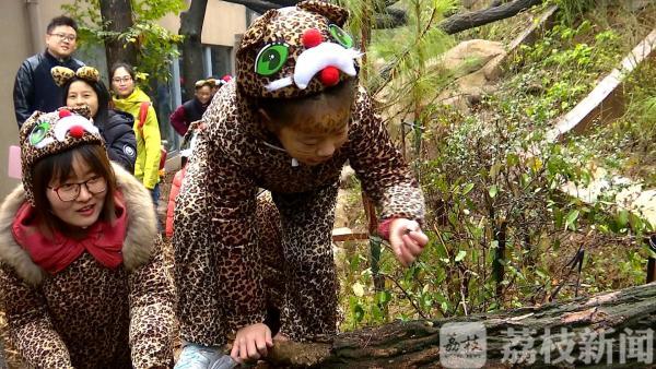 """亲子""""扮豹""""探访丛林 提前验收猫科动物""""新家"""""""