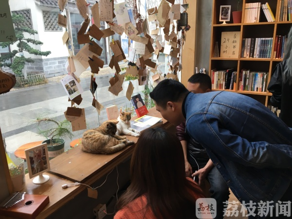 """24小时无人书店,猫咪当掌柜,现实版""""解忧杂货铺""""(视频)"""