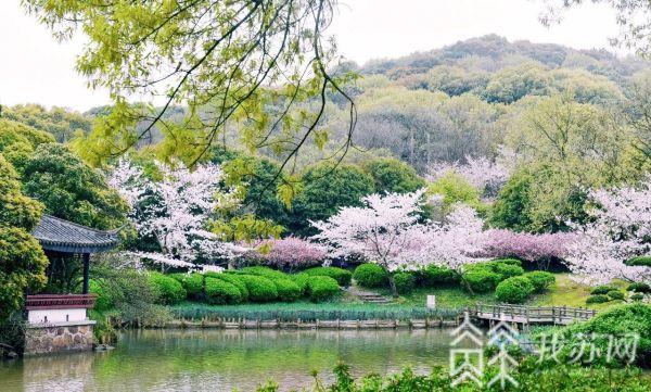 江苏各地百花盛开 多地赏花景点