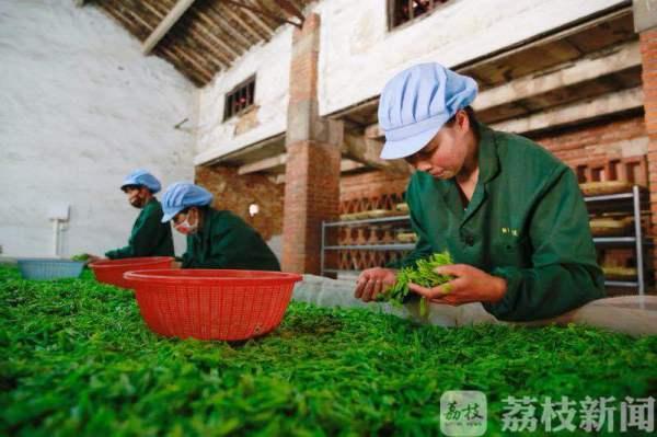 """这里的茶香被""""茶圣""""点赞!茶文化之旅中的历史温度"""