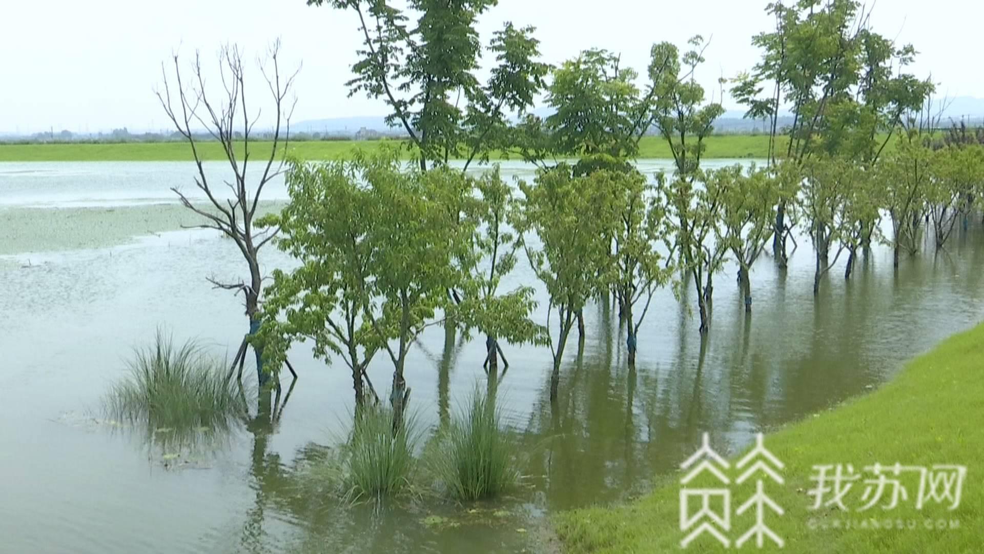 防汛:防汛人员紧急排险 溧水石臼湖:防止堤岸渗漏