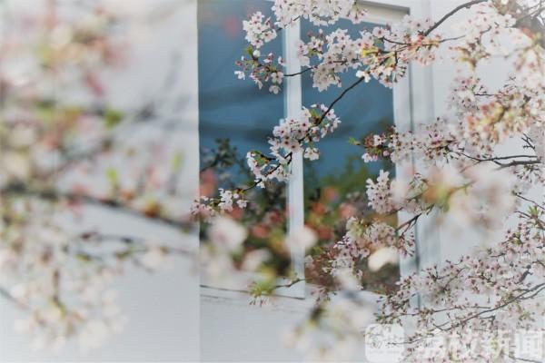 """南京广电网客户端_想念春天的校园了吗?快来一起""""云赏花"""""""