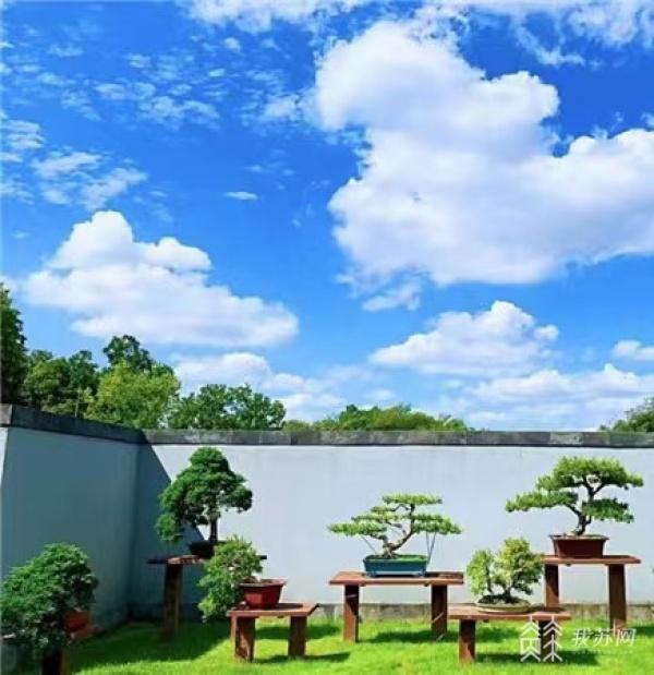 扬派盆景博物馆明天恢复开放
