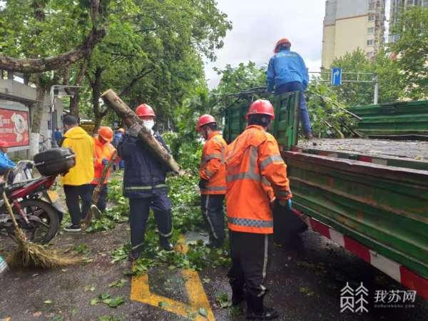 大风吹断行道树 南京园林部门紧急排险